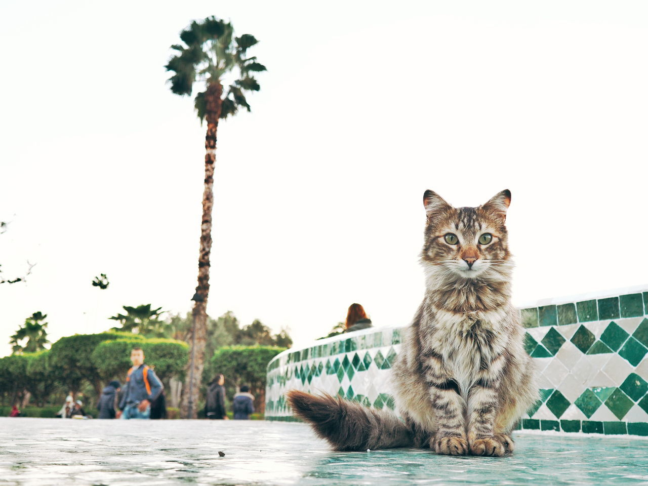 Animal Animal Wildlife Mammal Water River Animals In The Wild Looking At Camera Palm Tree Outdoors Portrait Feline Nature Tree Day Animal Themes No People Sky Cat Portrait Cat Street Cat Street Portrait Morocco 🇲🇦 Morocco Marrakech Neighborhood Map