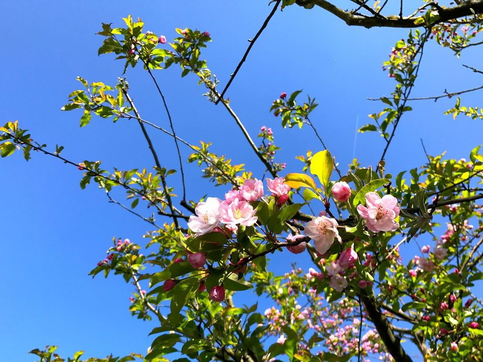 Flower Growth Beauty In Nature Tree Nature Low Angle View Branch Fragility Freshness Clear Sky Outdoors No People Sky Close-up Day