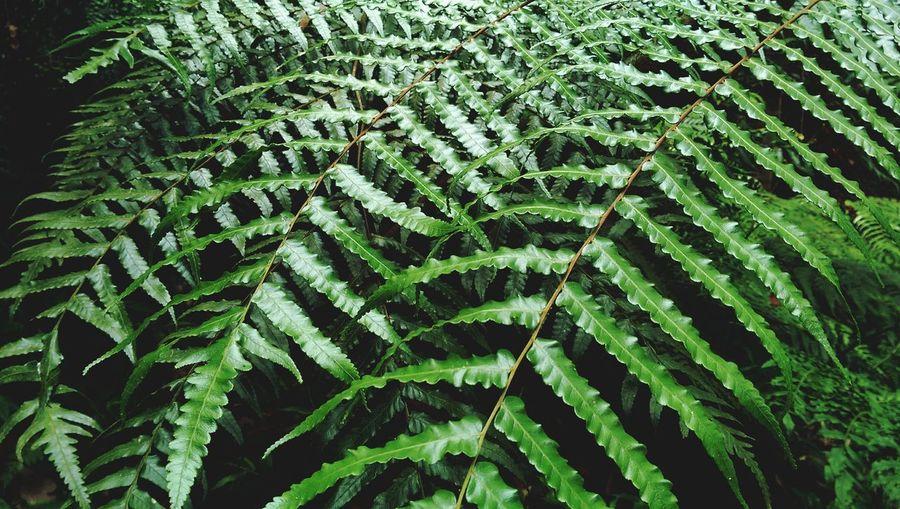 Exotic Fern Plants