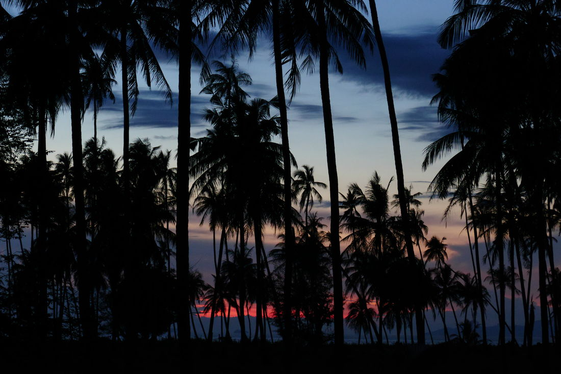 Abendstimmung am Palmenstrand, romamtic evening on a tropical island Abendhimmel ASIA Beauty In Nature Coconut Palm Tree Evening Sky Eye4photograghy EyeEm Asian Best Food EyeEm Best Shots - Nature EyeEm Nature Lover Growth Kokospalmen Landscape_photography Landschaft Nature No People Outdoors Palm Tree Silhouette Sky Sunset Tranquility Travel In Thailand Travel Photography Tree Tropical Paradise