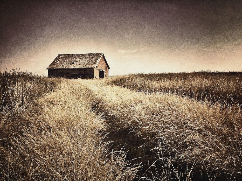 Rural Scenes by Shane Martin