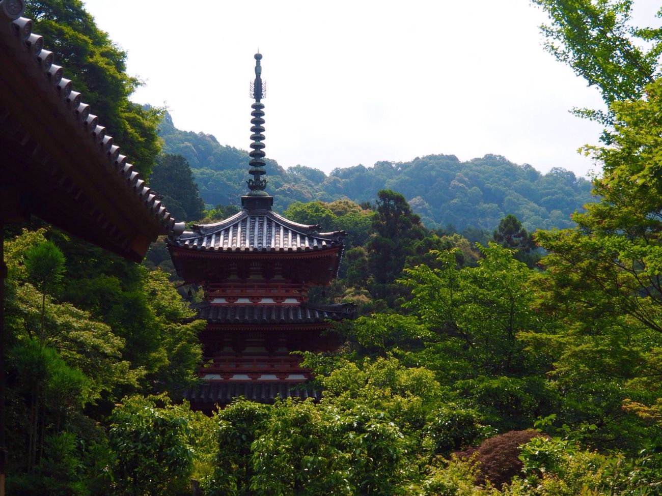 Kyoto Japan Uji Mimurotoji Temple Shrine Tree Architecture No People Nature Beauty In Nature Mountain Day Green Color Outdoors Sky Japanese Style Olympus PEN-F 京都 日本 宇治 三室戸寺