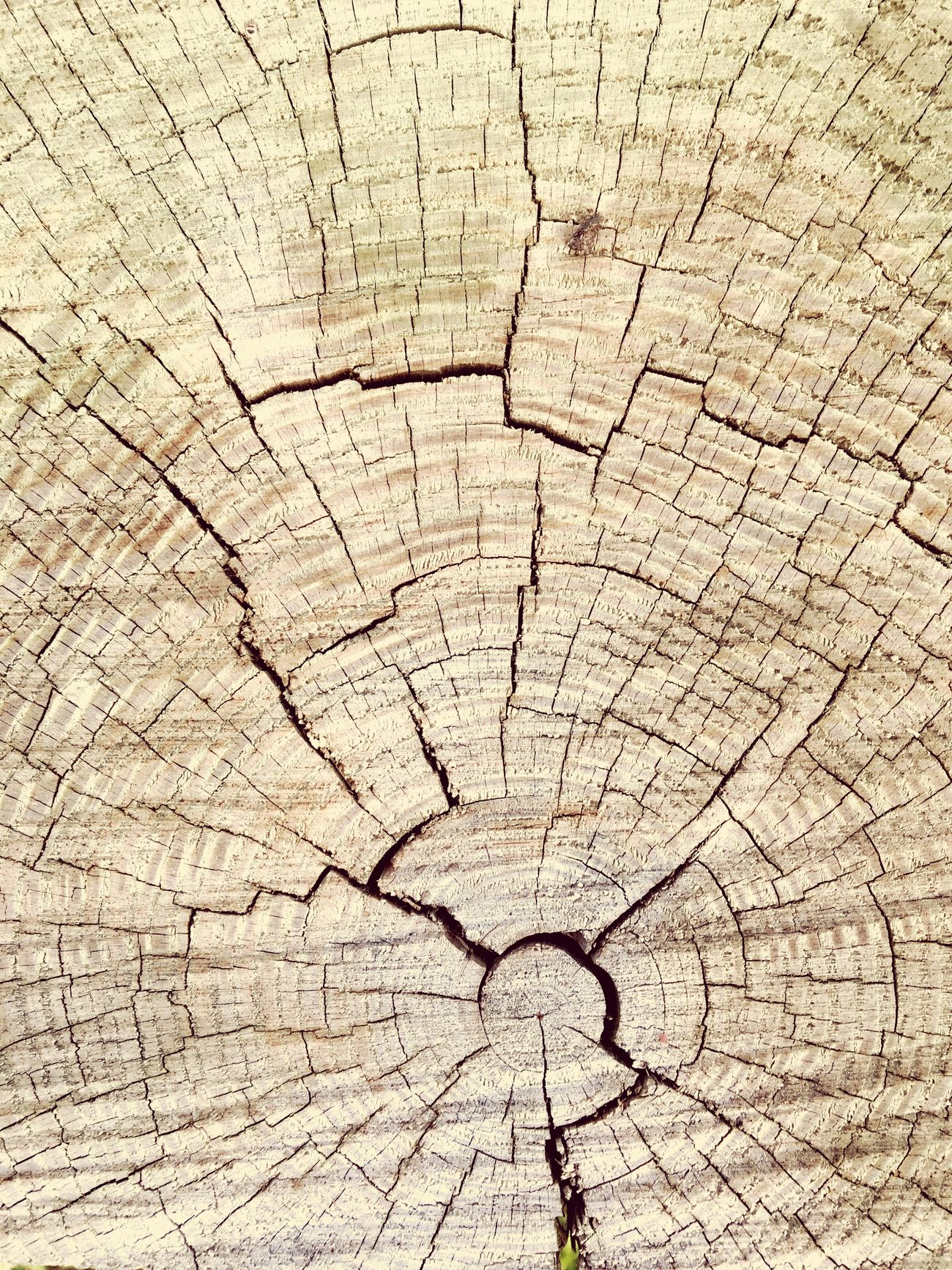 Wood you like to know? Life Outdoors Upclose And Personal Growth Nature Mystyle Wood Cracks Textured