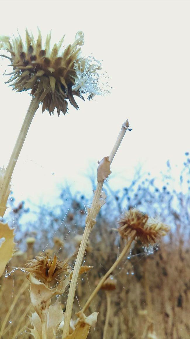 Dew Drops Morning Walk No Sun Misty Wildflowers Dead Fall Time Still Beautiful