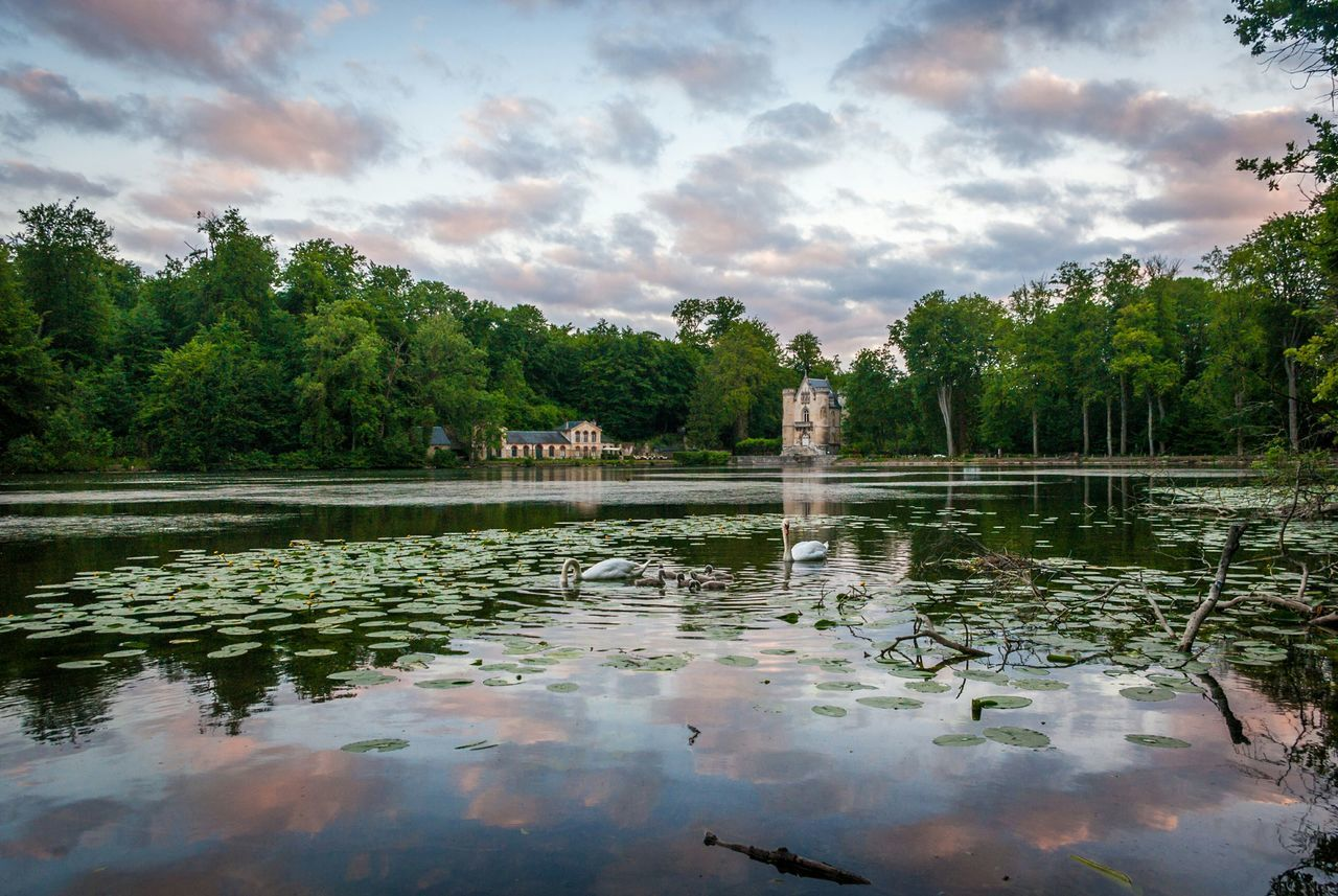 Walk around a lake close to Chantilly , France . Waited an hour watching Swans with their Cygnets before twilight. Waterlily Sky And Clouds Mirror Water Nature On Your Doorstep My Best Photo 2015
