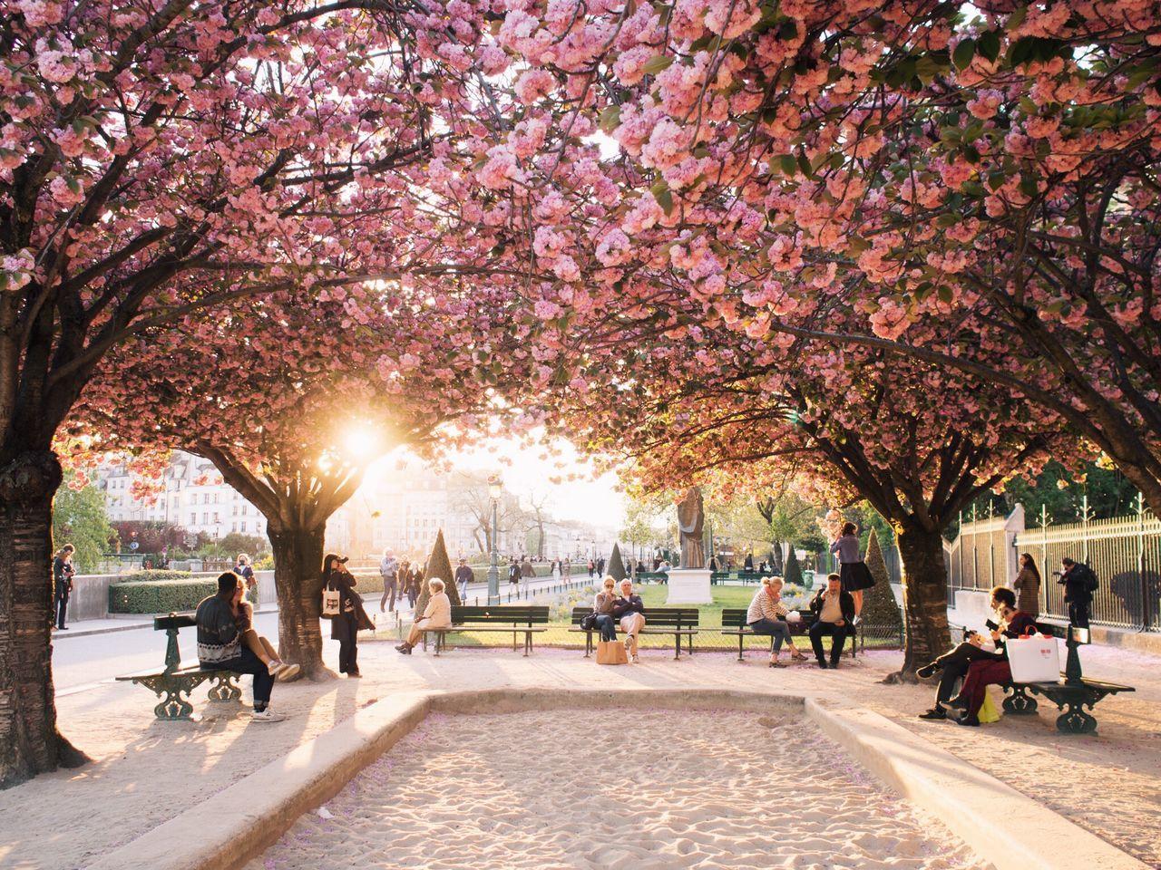 Beautiful stock photos of paris, Beauty In Nature, Below, Bench, Day