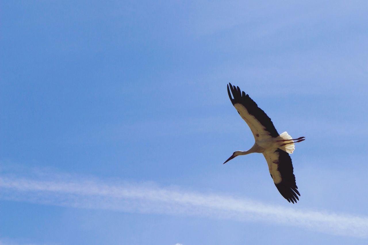 Beautiful stock photos of wings, Bird, Blue, Cloud, Day