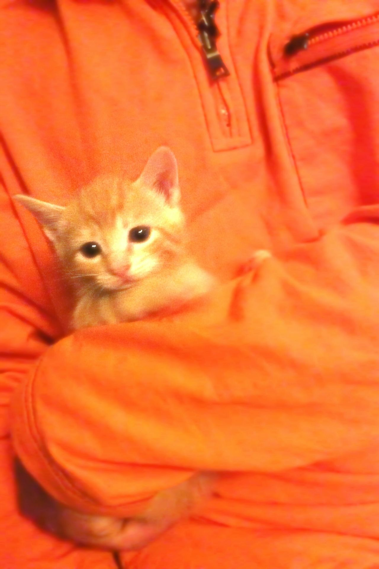 I Love My Cat Light Up Your Life EE_Daily: Orange Tuesday Pets Cats Pets Corner Kitty