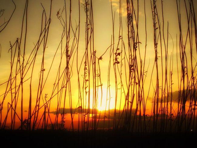 お疲れサンセット Walking Around Enjoying Life Relaxing 楽しいひと時 シルエットロマンス Beautiful Sunset Sunrise_sunsets_aroundworld Running Around Myfavoriteplace Peace And Love Beautiful Day EyeEm Best Shots IPhoneography Beautiful View Enjoying The Sun Beautiful Nature