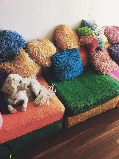 Australia Relaxing Dog Love