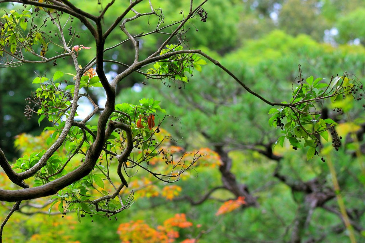 数多い枝の中で、一番目を引いたのはコレ♪(*´︶`*)✿ Tree Trees Tree_collection  EyeEm Best Shots - Trees Japanese Garden Japanesegarden Japanese  EyeEm Best Shots Japanese Style Japanese Culture