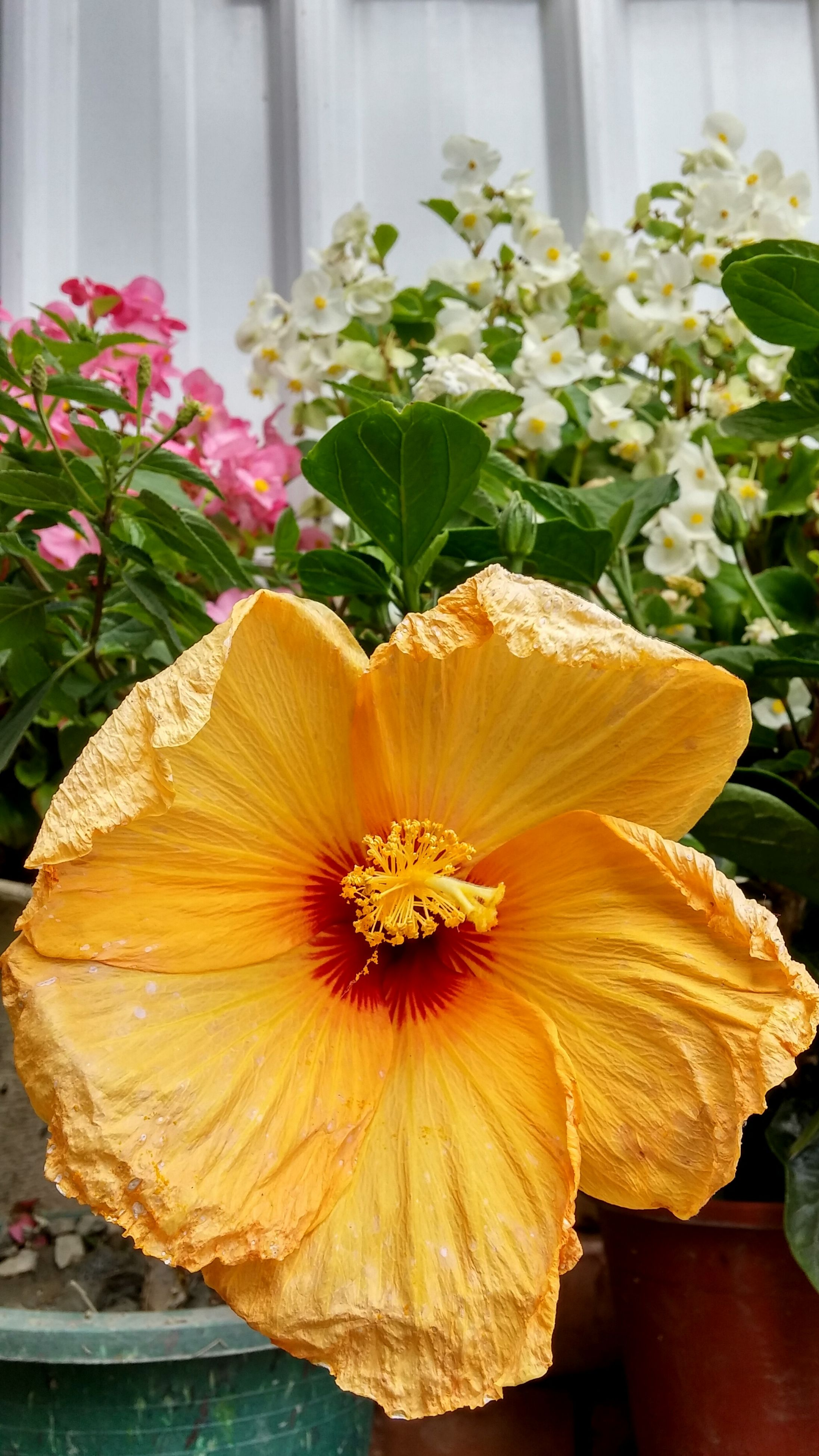 flower, freshness, petal, fragility, flower head, close-up, beauty in nature, leaf, indoors, plant, growth, nature, orange color, table, focus on foreground, blooming, yellow, no people, day, high angle view