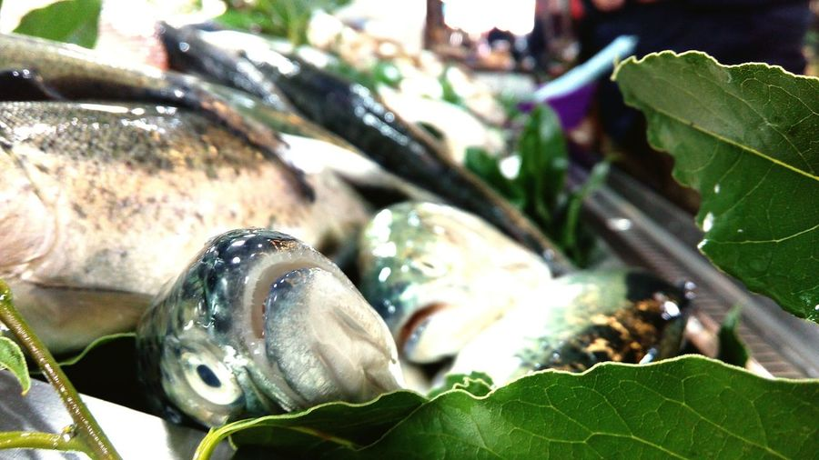 Fish 😝
