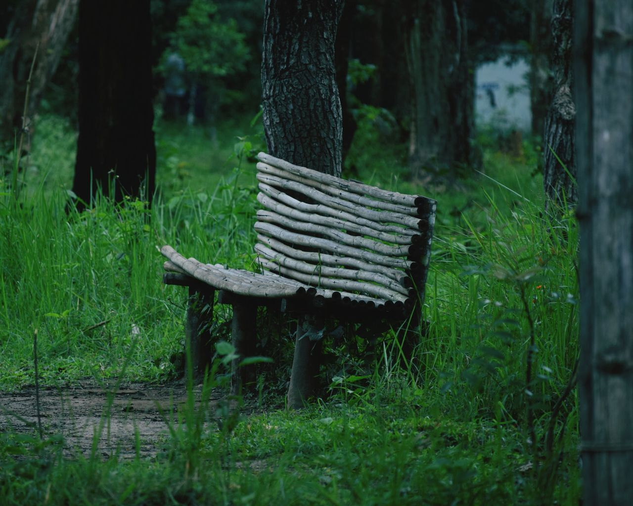 Green Chair Melancholy Coorg Woods Trees