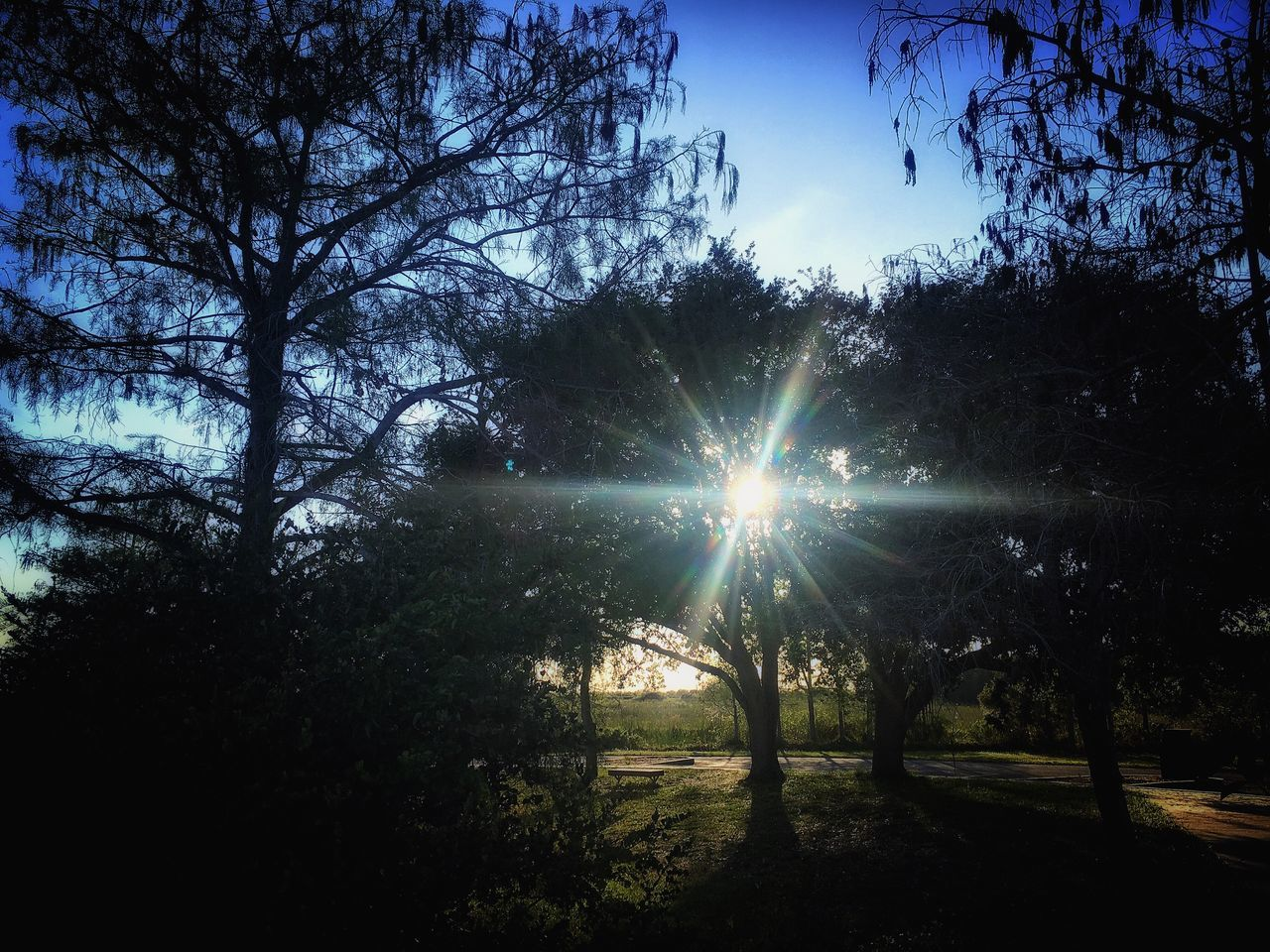 tree, sunbeam, nature, sun, sunlight, scenics, tranquility, beauty in nature, tranquil scene, silhouette, no people, growth, outdoors, branch, sky, day, forest, landscape, sunset