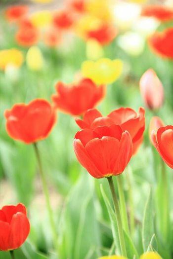 Хочу пожелать вам незабываемой весны, побольше радости в жизни, дарите тепло и заботу окружающим вас дорогим и близким людям моя весна