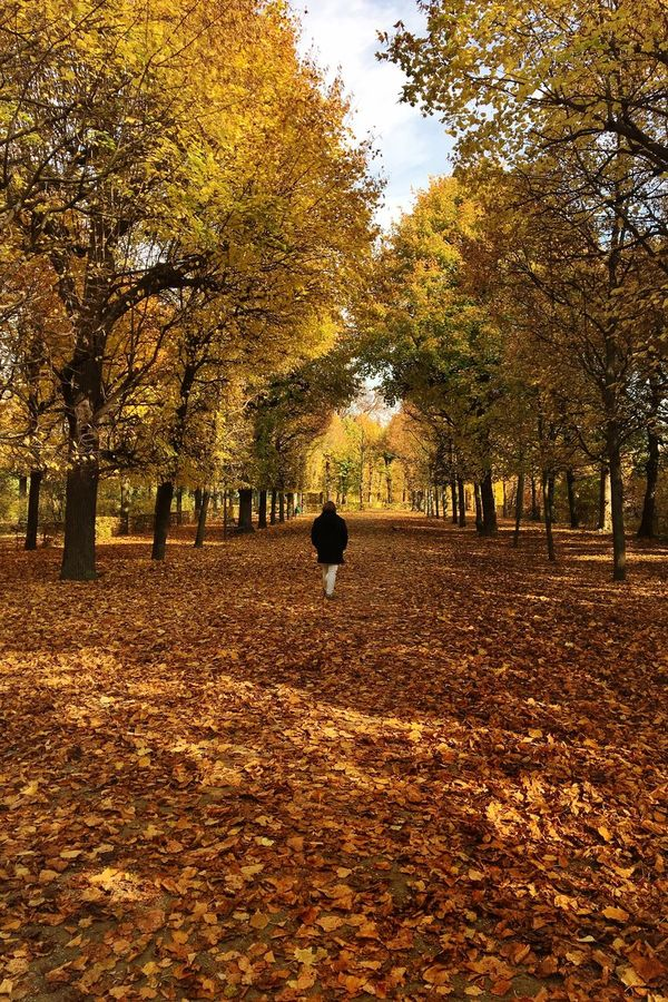 walk in fields of gold | Autumn Nature Beauty In Nature Outdoors Trees Fall Fall Beauty Orange Orange Leaves Yellow Leaves Person Walking Autumn Leaves Walk In The Park Fields Of Gold October Fall Colors Me :)  Walking Around Walking Away Paint The Town Yellow
