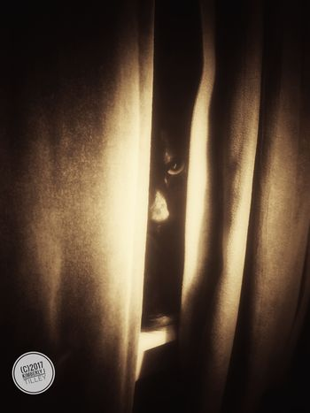 It's October and horror movies are on the tele. You look over, and see someone is reenacting a scene from a movie, maybe Stephen King's The Shinning, or perhaps The Grudge. Let's just hope she doesn't get any ideas. Happy Halloween Cat KimberlyJTilley