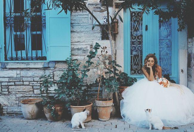 Bridalportrait Weddingfoto Wedding Photos Wedding Photography Bridal Photoshoot Turkey Weddingphoto Weddingday  Bridal Cats Weddingphotographers Harundurgun