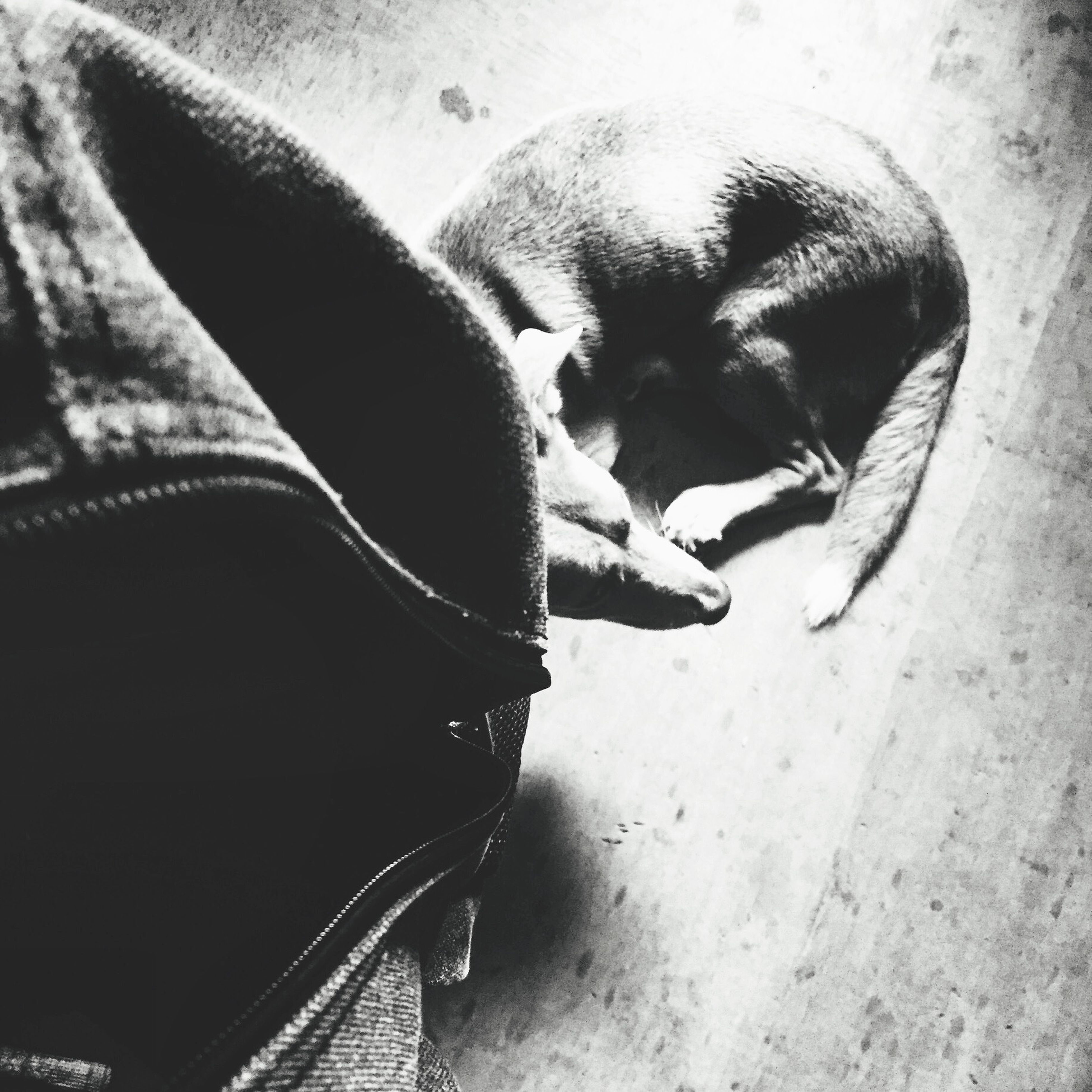 indoors, animal themes, one animal, shoe, high angle view, close-up, low section, domestic animals, person, pets, part of, footwear, mammal, unrecognizable person, day, relaxation, shadow