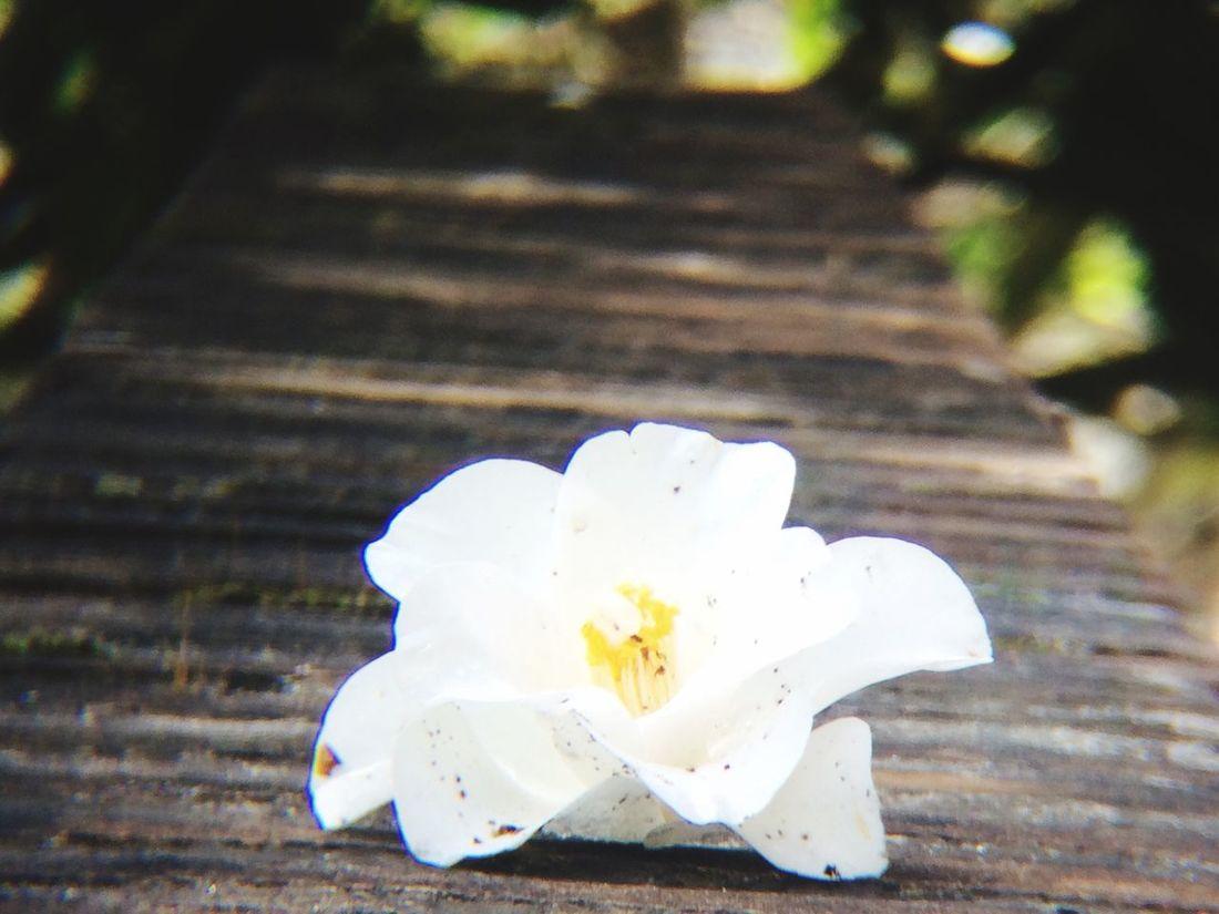 Flowering Bridge First Eyeem Photo