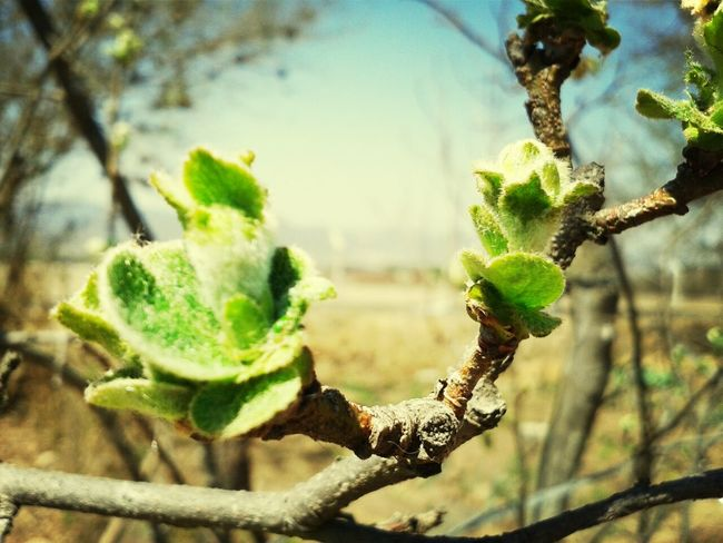 fin de invierno Plants Macro_collection Macro