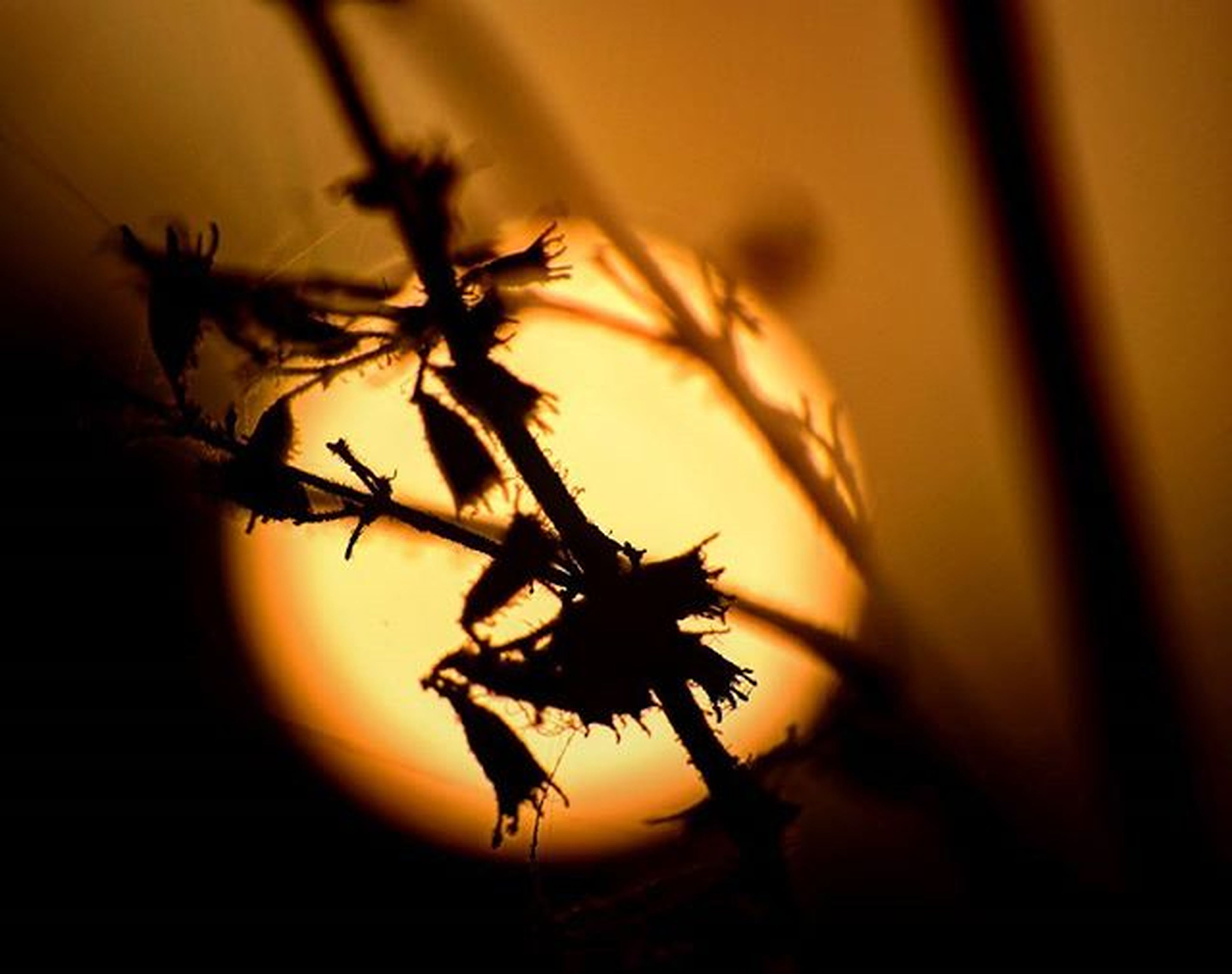 sunset, orange color, silhouette, close-up, focus on foreground, nature, beauty in nature, growth, plant, selective focus, tranquility, sky, stem, yellow, indoors, no people, leaf, sun, scenics