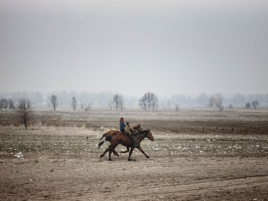 Central Asia Horserace Horses Kyrgyzstan Riders
