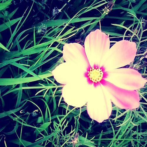 Flower Pink Flow