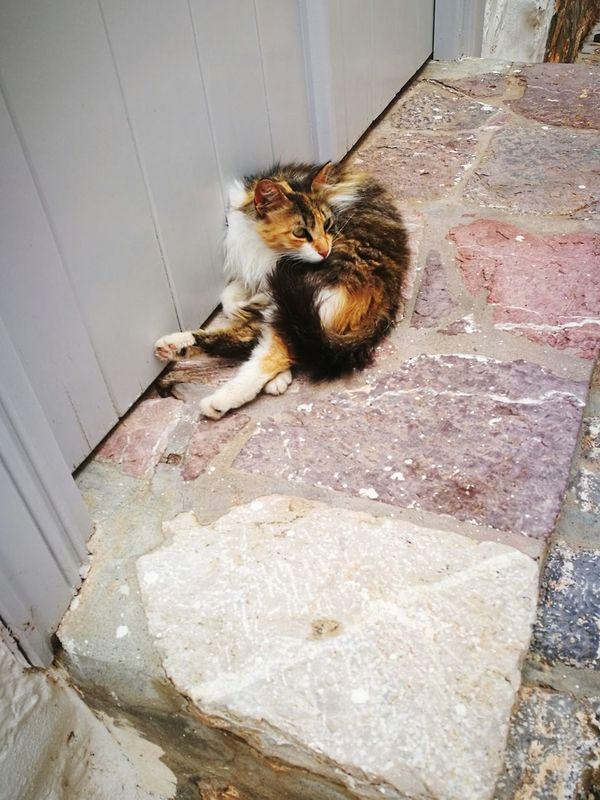 GREECE ♥♥ Greece Island Sea Fuuny Cat greece islands Vacation Time Close-up Ýdra, Greece Ydra Idra Greece Chat Château Kitten 🐱