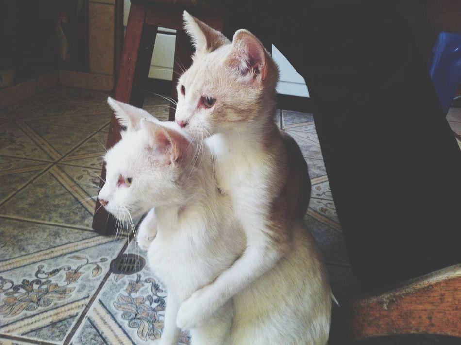 Cute Pets Hug ❤ Cats Of EyeEm Very Cute