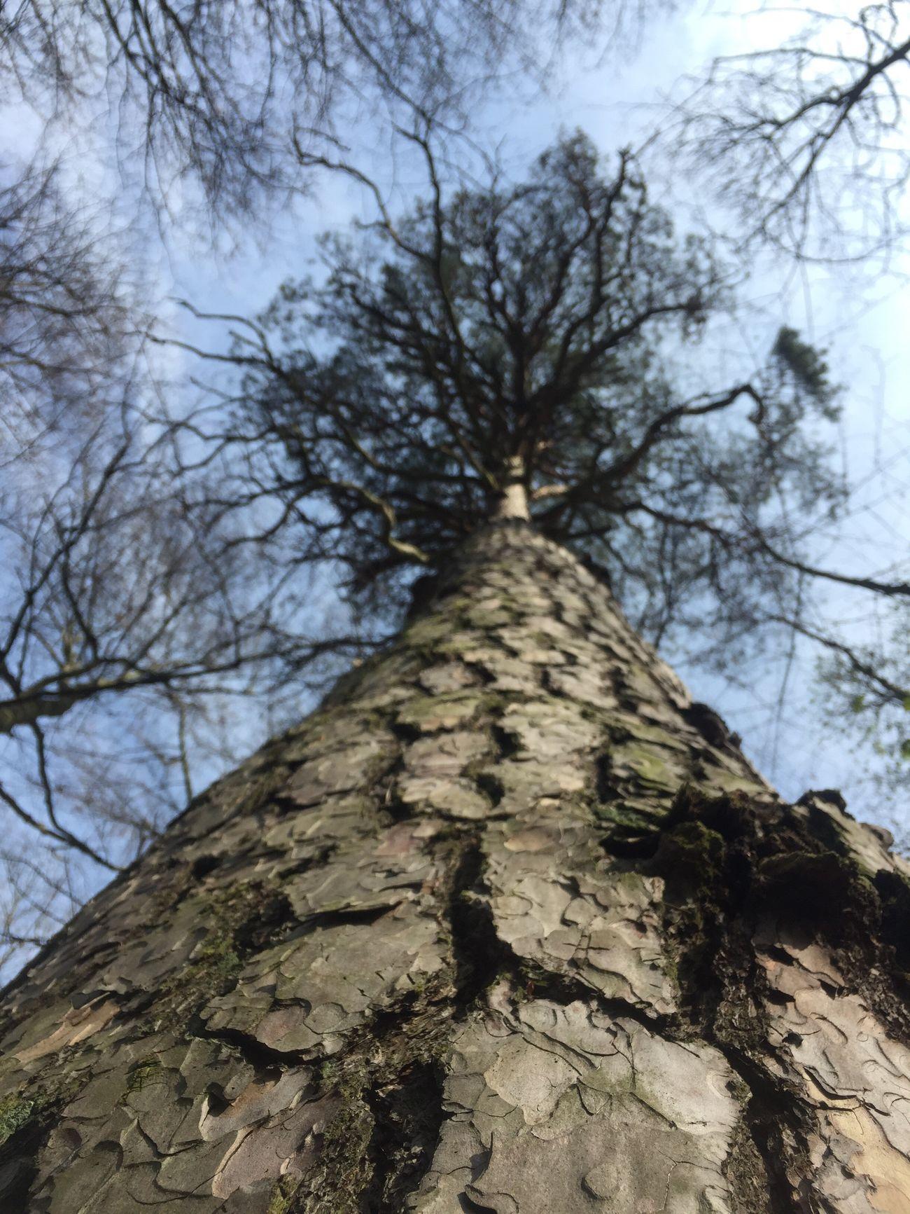 Einfach mal in den Wald gehen.... tief durchatmen und auf die kleinen Dinge im Leben achten denn darauf kommt es an Tree Sky Nature No People Day Outdoors Beauty In Nature First Eyeem Photo