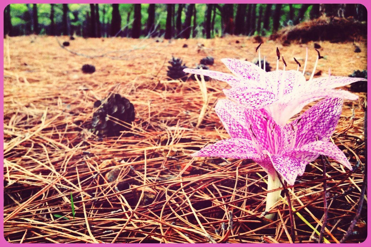 Flower Datça Nature Pink Flower