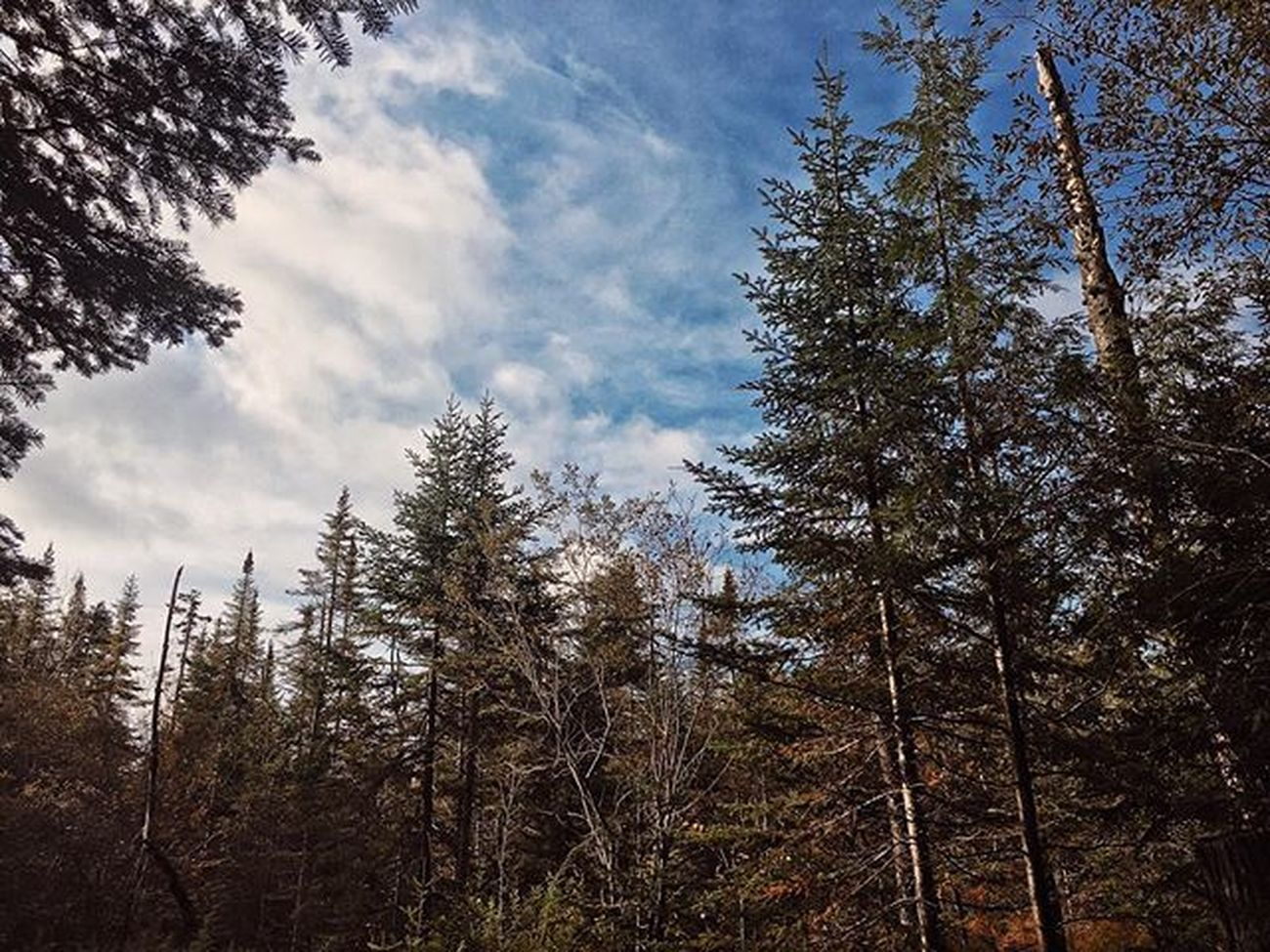 ADK Adirondacks Nature Tree Upstateny NY Mountains Forest Color Pixelpanda Photomasters Clouds Sky Photooftheday IPhoneography Iphone6s Travel Explore Adventure Adkmountains Visitadks Vscocam Snapseed