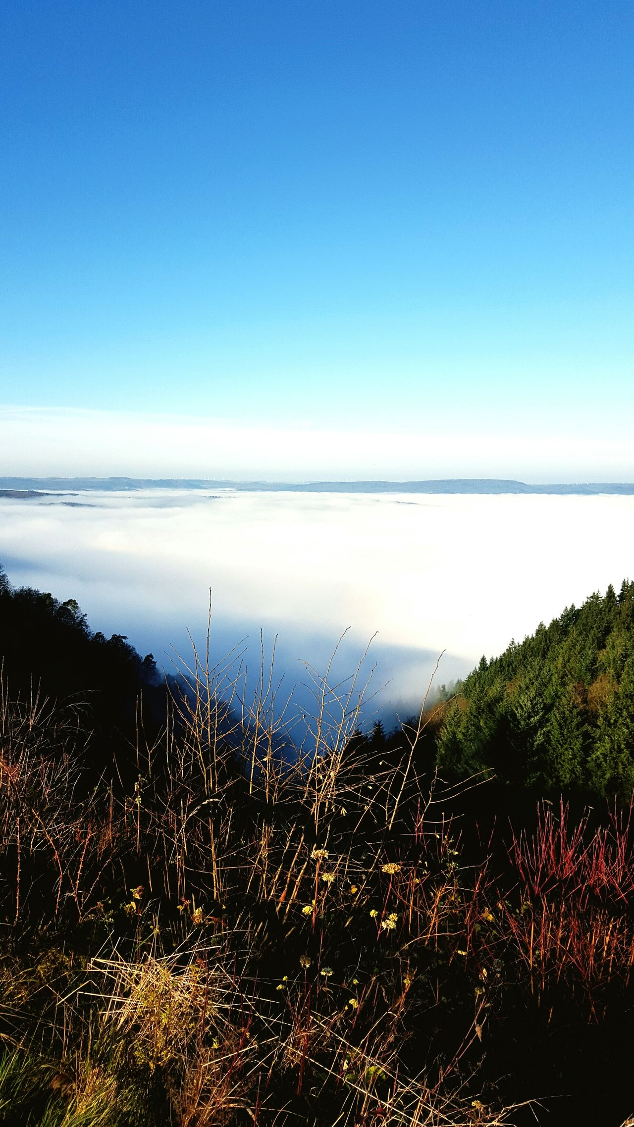 Seaofclouds Lakeofclouds Seaoffog Fog Foggy Foggy Morning Fall Fall Beauty Fall_collection