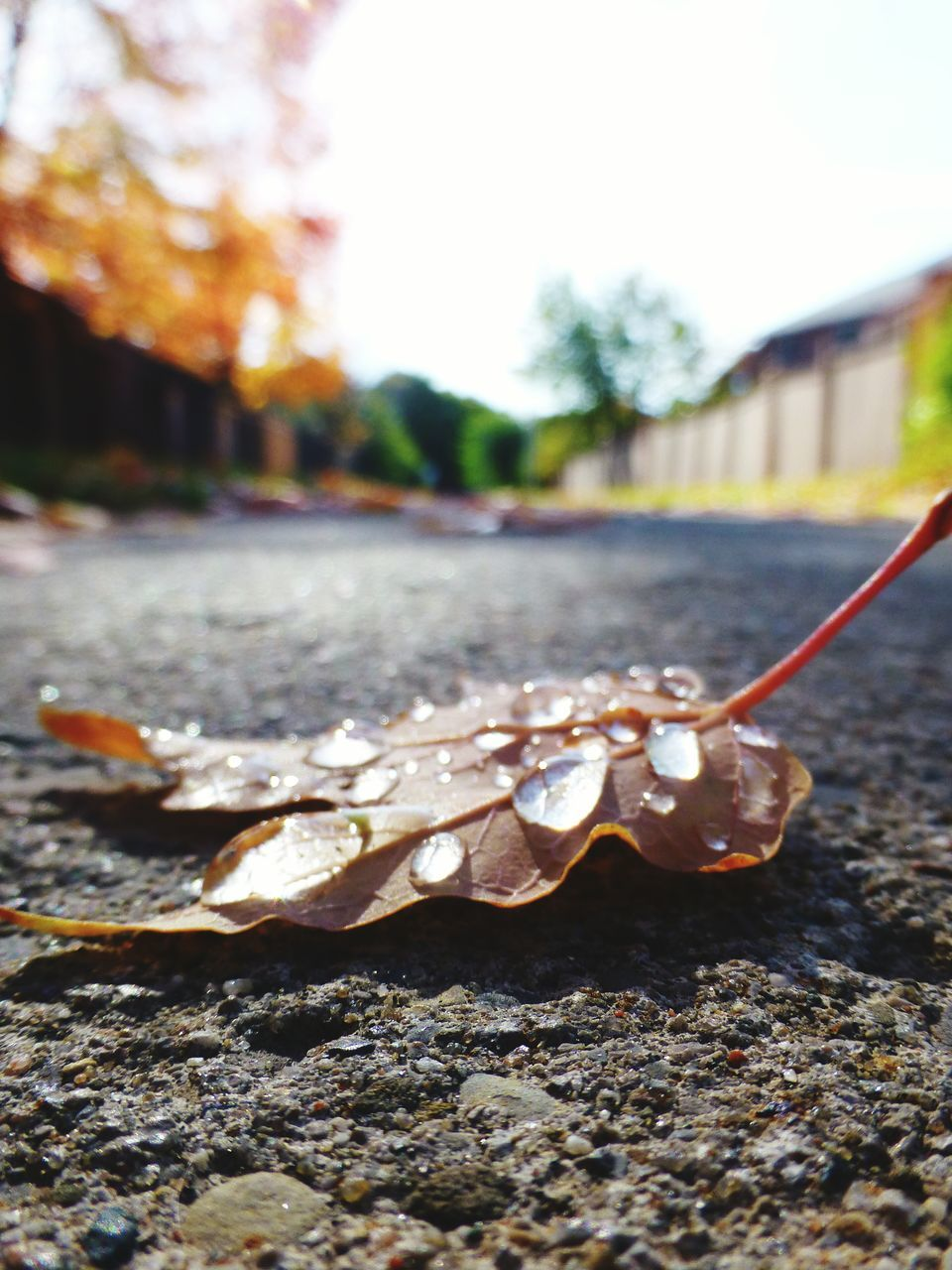 no people, outdoors, close-up, day, nature, leaf, animal themes, tree