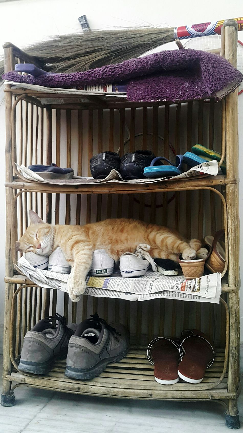 No People Shelf Sleeping Weekend Animal Themes Pets Shoe Shelf Hanging Around Relaxing Place Catlovers Relaxing Time Relaxing Moments Shoes Cats Sleeping Cat Relaxation Cats Of EyeEm Choice One Animal Business Finance And Industry Cat Lovers