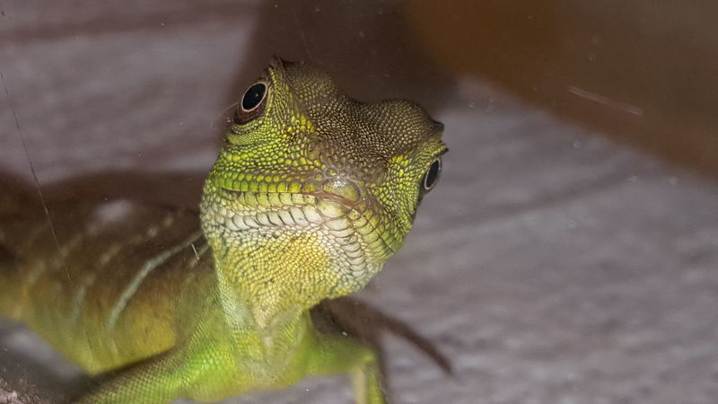 One Animal Animal Wildlife Eye Close-up Closing Social Issues No People Water Day Portrait Indoors  Nature Animal Themes Water Dragon Lizard Lizards Lizard Nature Lizard Close Up Reptile Reptilecollection Reptiles Lizard Love Nature Green Color