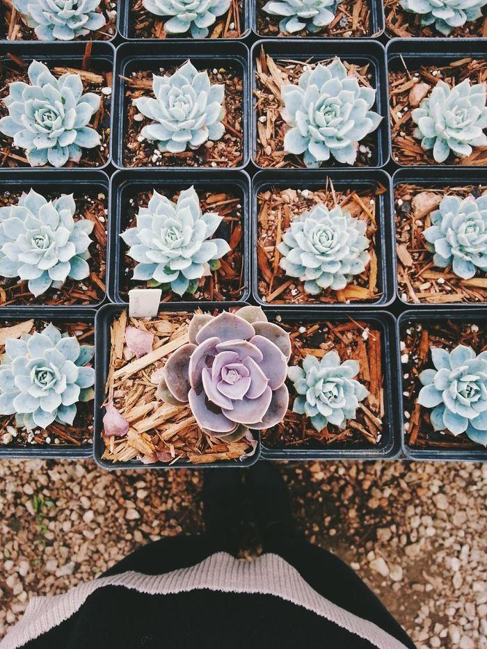 Love mini succulents! Plant Beauty In Nature Succulents Succulent Plants Gardening Garden Photography Terrariums Mini Plants House Plants Cacti Garden Spring Has Arrived Quiet Moments Zen Meditation Quiet Places Quiet Thoughts Relaxation Introvert