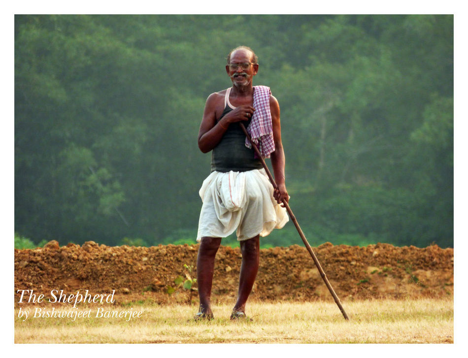 The Shepherd Business Government India Indian Indian Shepherd Male Shepherd Management NGO Old Indian Old Man Old Shepherd Rural Shepherd Villager Walfere