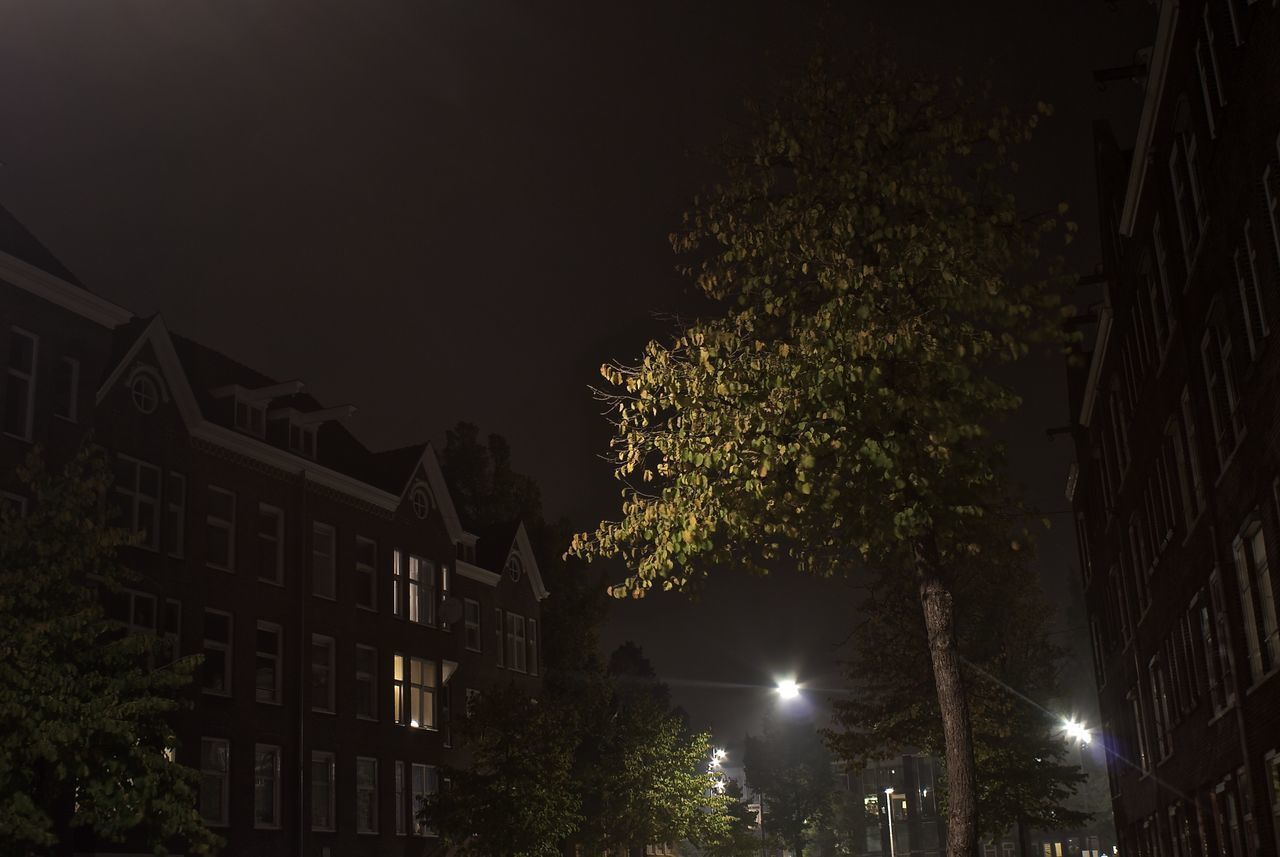 tree, night, illuminated, architecture, low angle view, outdoors, building exterior, built structure, no people, city, growth, nature, sky