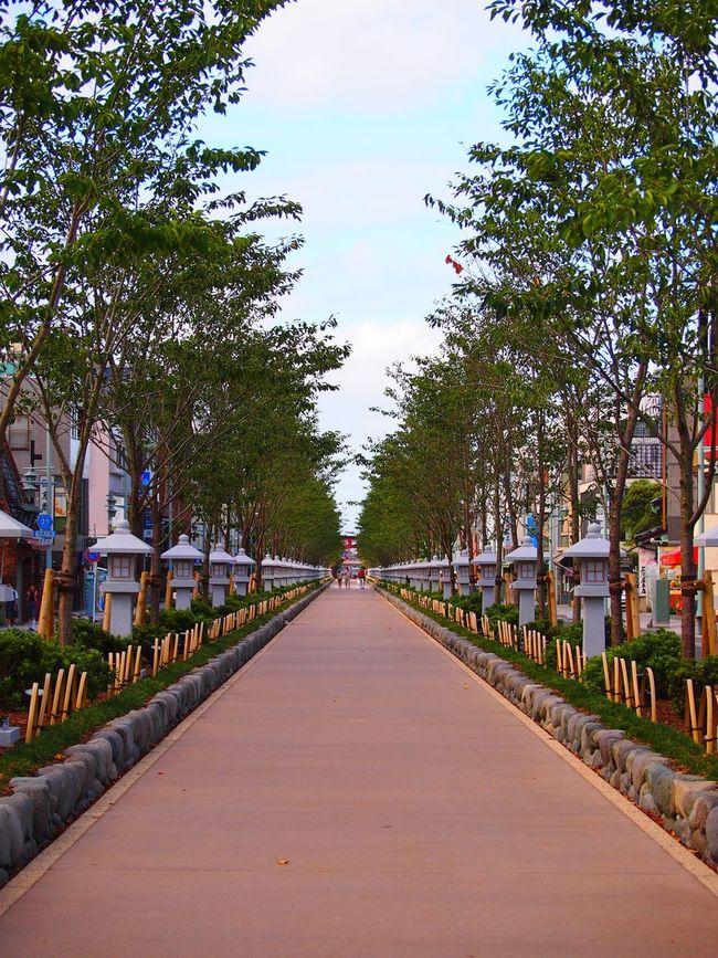 早朝は人が少なくて、のんびり散策できる Approach Row Of Trees Lantern Lanterns Stone Lantern Stone Lanterns Shrine Depth Summer Summer Morning Early Morning 鶴岡八幡宮 段葛