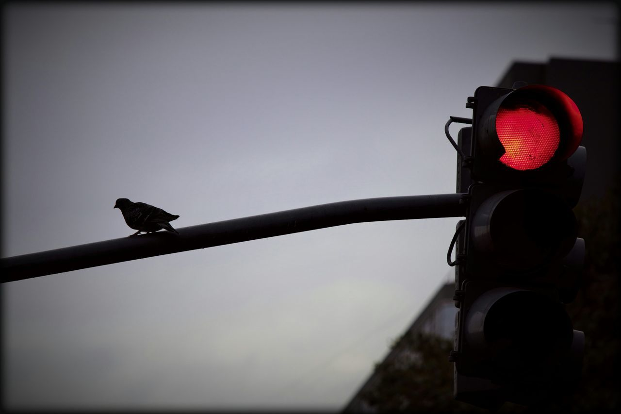 Una paloma sobre el semáforo No People Bird Paloma Taking Photos Popular Photos EyeEmBestPics Semáfororojo Semáforo Ave EyeEm Best Shots Black&white Dove In The City Dove Traffic Lights Traffic Light, Red Light, Luz Roja Stoplight Ciudad City Life City City Lights Cityphotography Bird Photography Birds Of EyeEm  Ciudad Autónoma De Buenos Aires The Street Photographer - 2017 EyeEm Awards