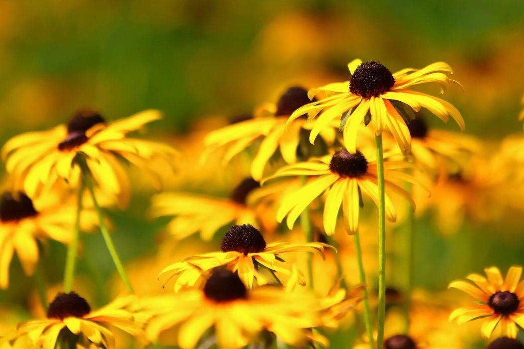 盛夏 Flowers