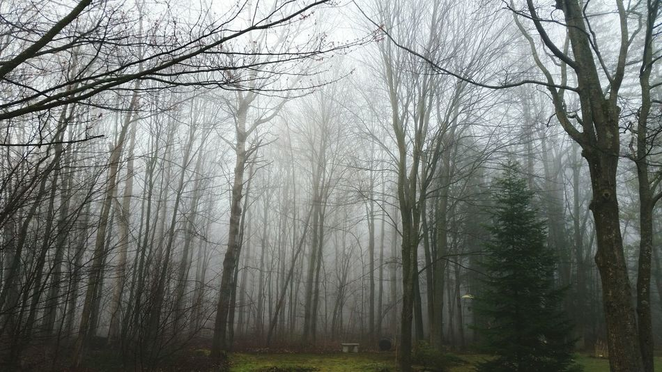 The Great Outdoors With Adobe , Beautiful Foggy Morning