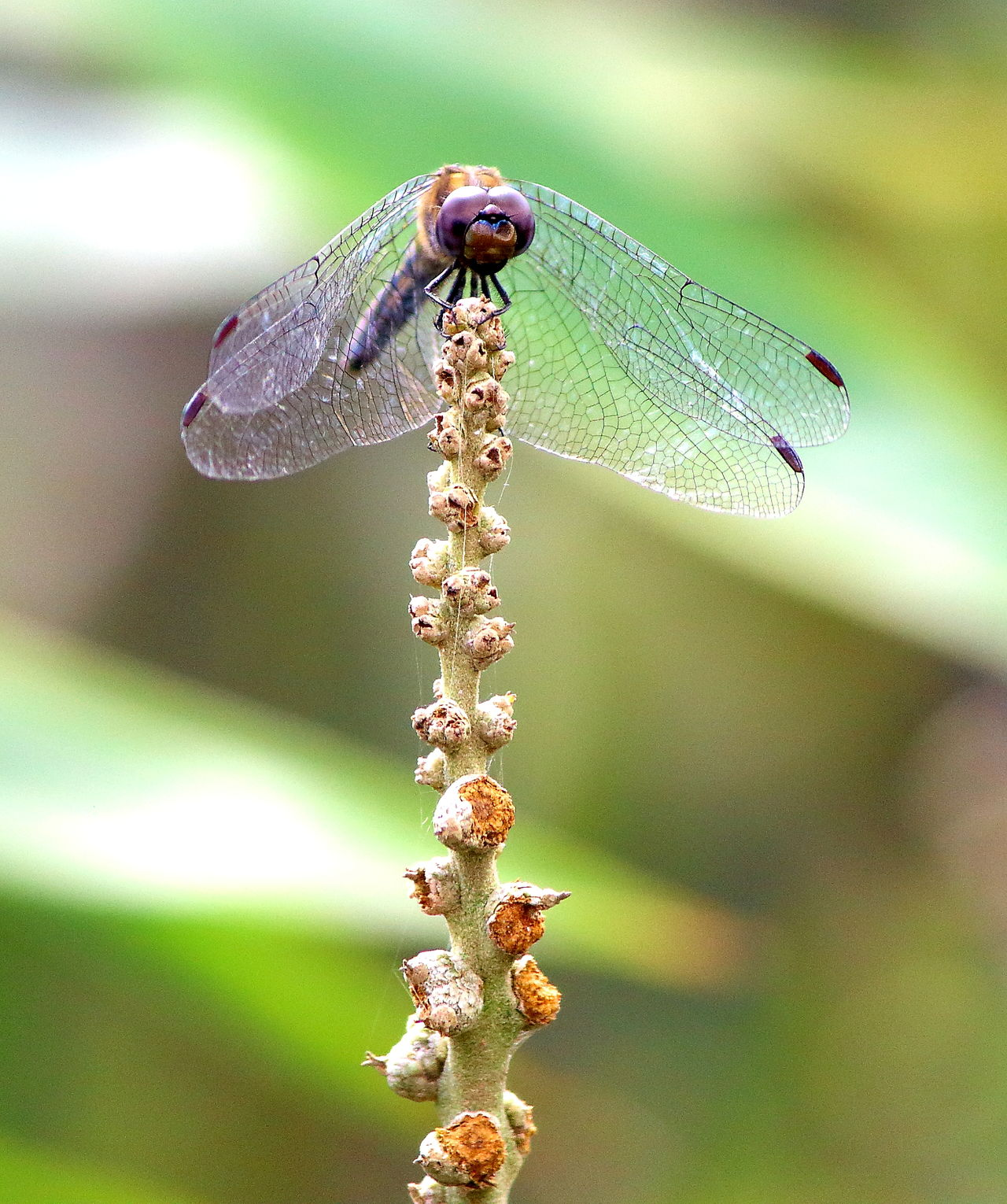 This little dragon fly surely caught my eyes and the camera lens too. Insect Animal Themes Animals In The Wild One Animal Animal Wildlife Nature No People Close-up Plant Day Bee Beauty In Nature Buzzing Outdoors Fragility Freshness Landscape Blue Scenics Beauty In Nature Weather Nature