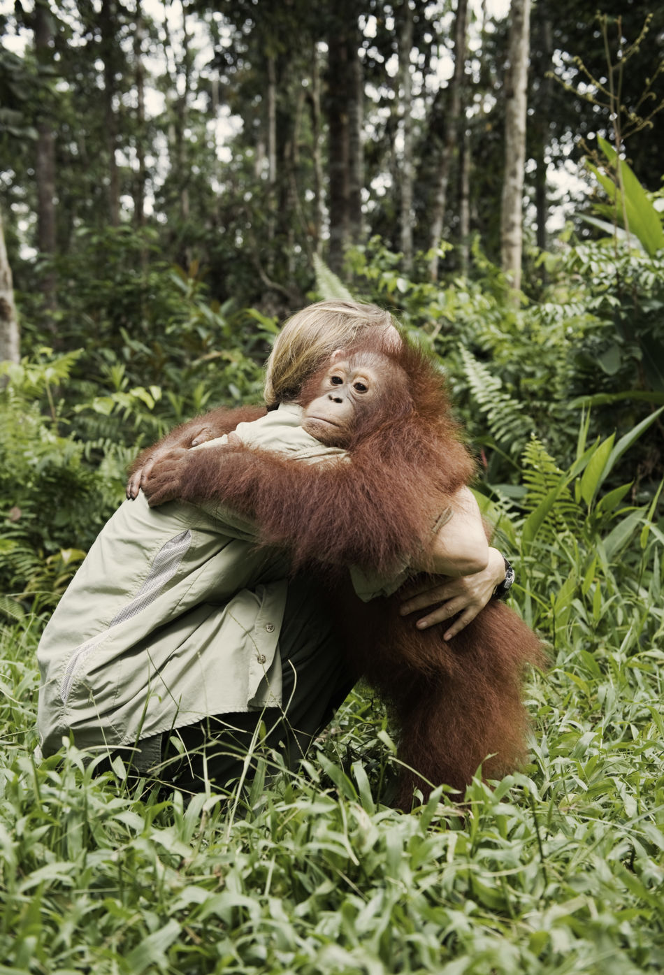Lone Drocher Nielsen, a Danish wildlife conservationist who established the Nyaru Menteng Orangutan Reintroduction Project on Borneo, comforting an orphan orangutan. The project is the world's largest primate rescue operation, caring for more than 650 orangutans. The majority of them rescued from the palm-oil plantations that destroyed their forest habitat. Orangutans share approximately 97 percent of their DNA with humans, making them among our closest cousins. Capture The Moment Animals Animal_collection Orangutan Borneo Kalimantan Rainforest Palm Oil Environmental Conservation Wildlife Two Is Better Than One People And Places