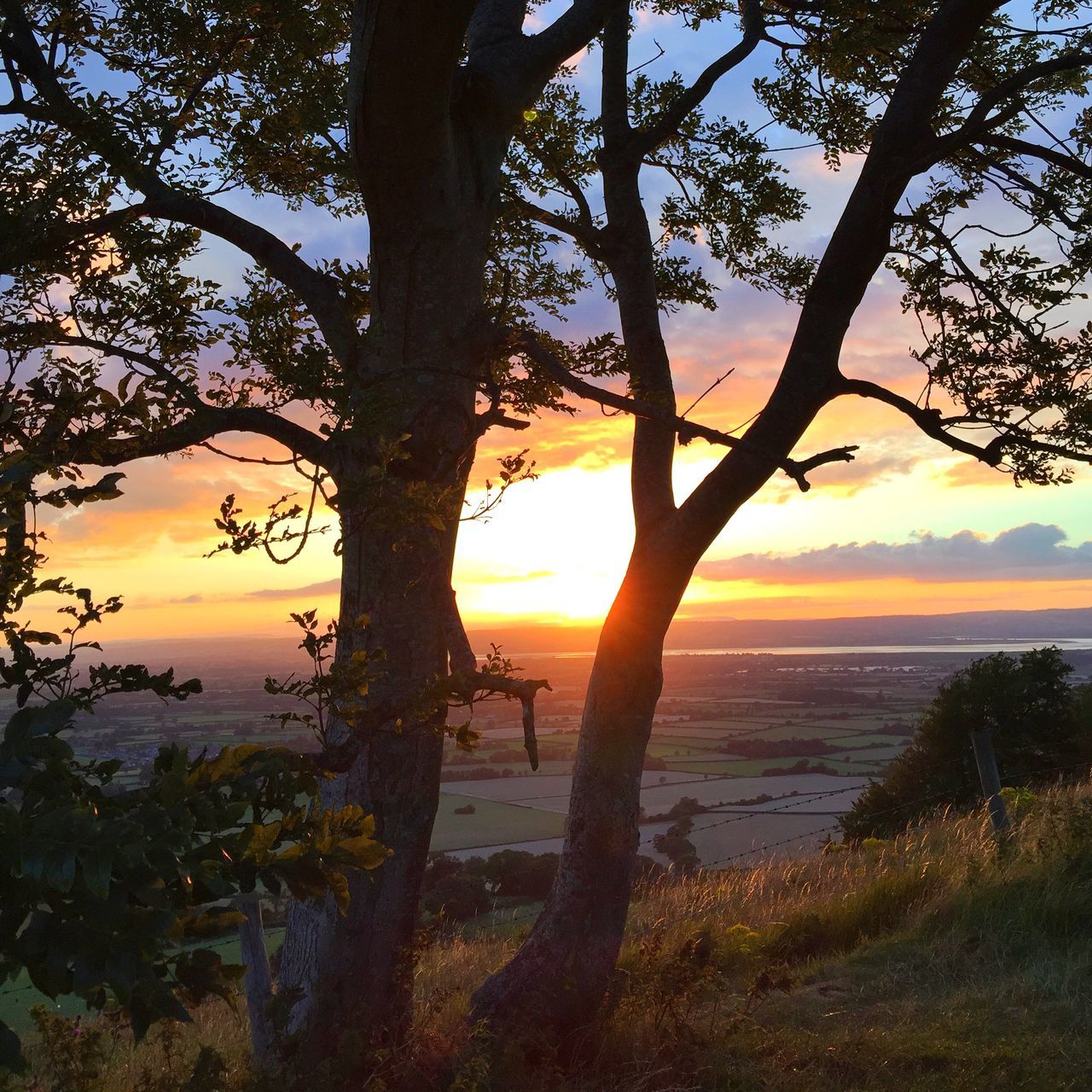 Sunset through the trees Viewpoint Cotswold Way Summer Sunlit Beauty Golden Hour Gloucestershire Sundown Landscape Evening Falls EMCSummerViews Landscapes With WhiteWall 43 Golden Moments