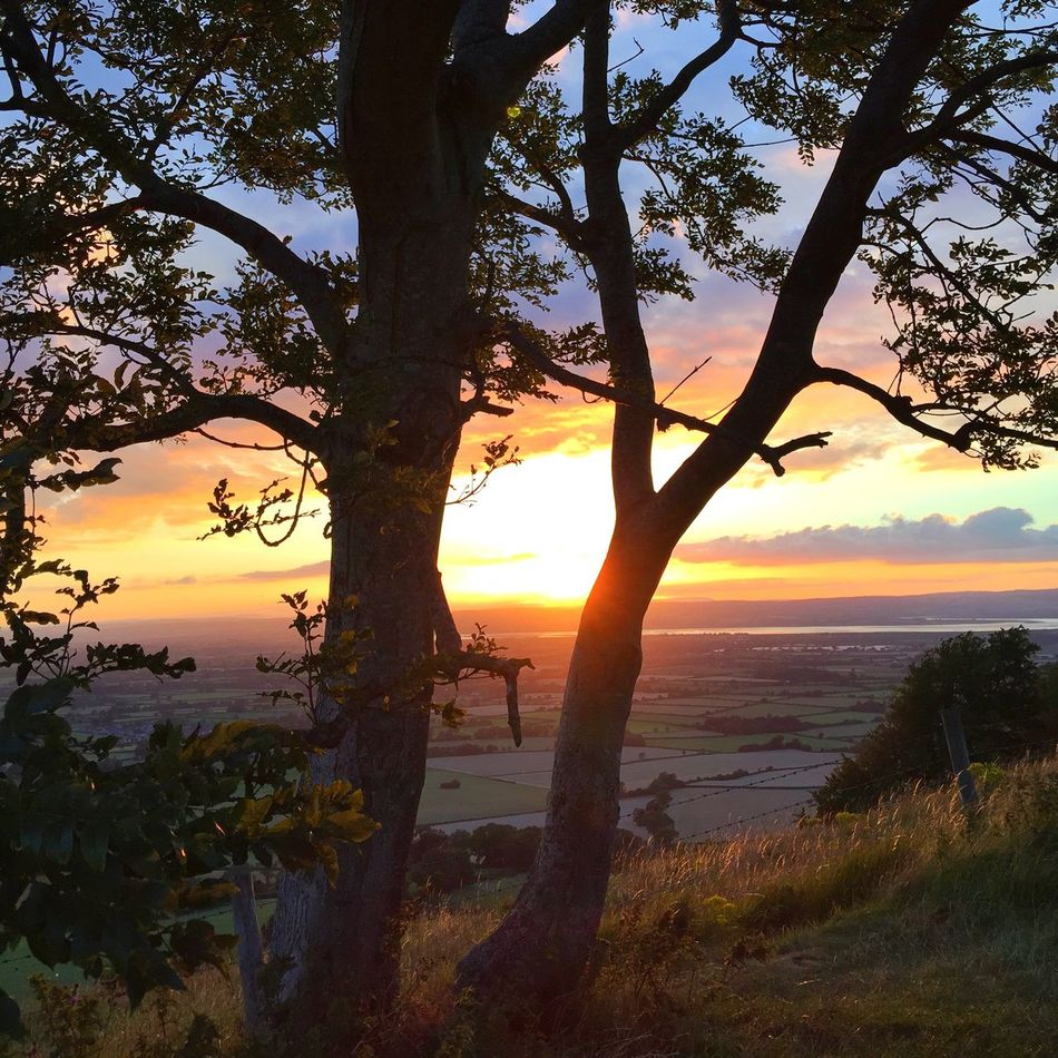 Sunset through the trees Viewpoint Cotswold Way Summer Sunlit Beauty Golden Hour Gloucestershire Sundown Landscape Evening Falls EMCSummerViews Landscapes With WhiteWall 43 Golden Moments