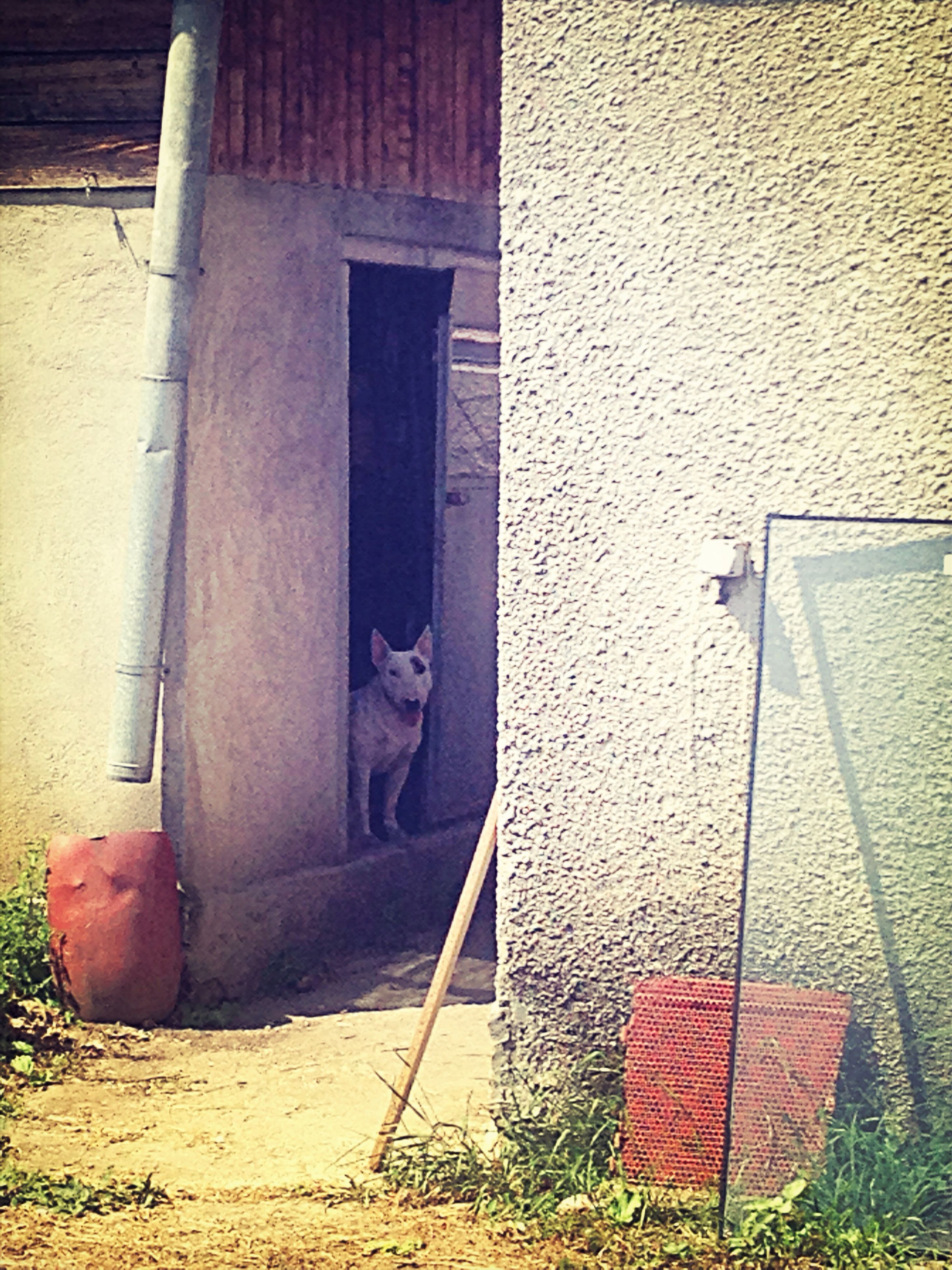 building exterior, architecture, built structure, house, wall - building feature, door, one animal, brick wall, animal themes, window, building, domestic animals, day, residential structure, outdoors, wall, no people, abandoned, sunlight, steps